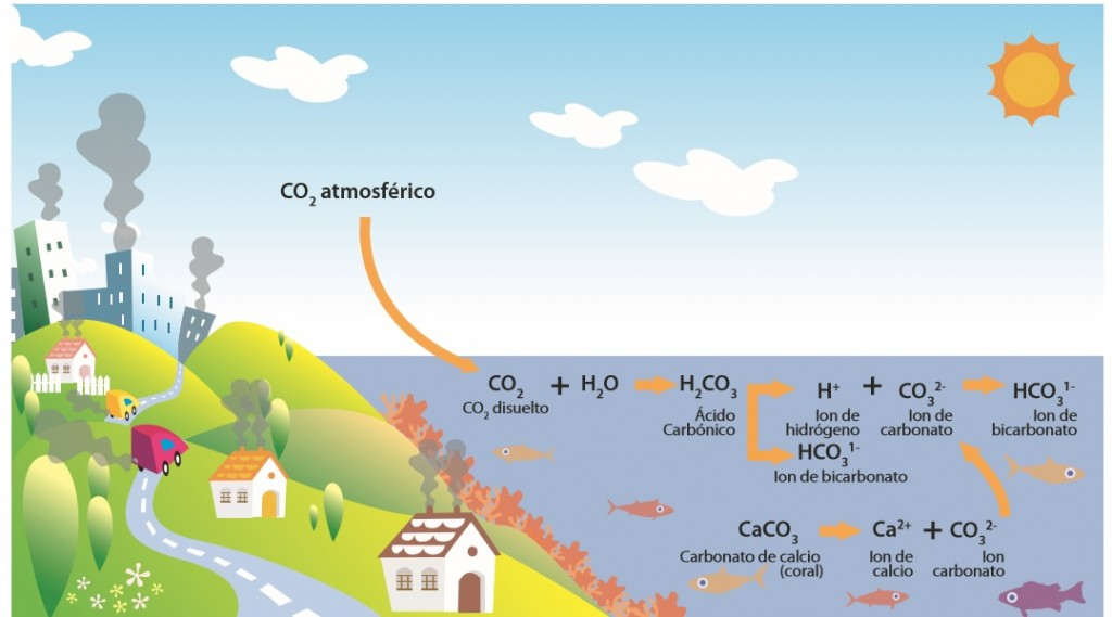 Acidificació-oceans
