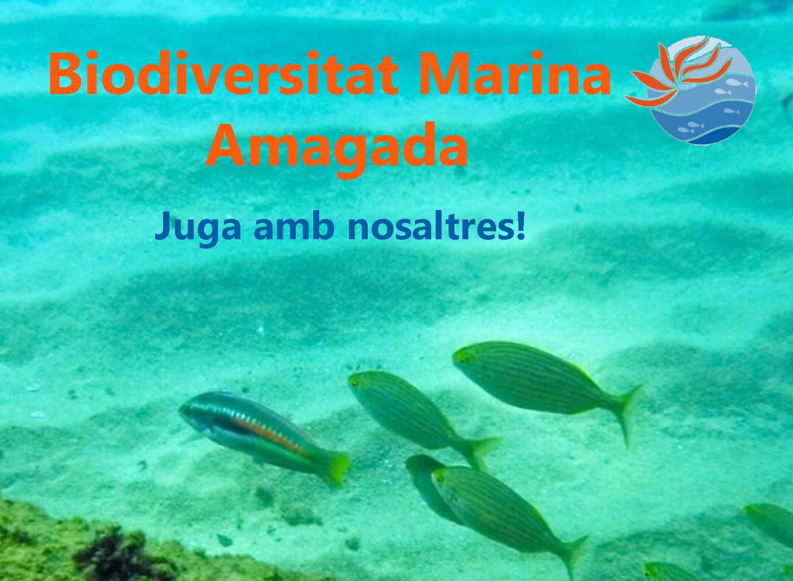 biodiversitat-marina-amg