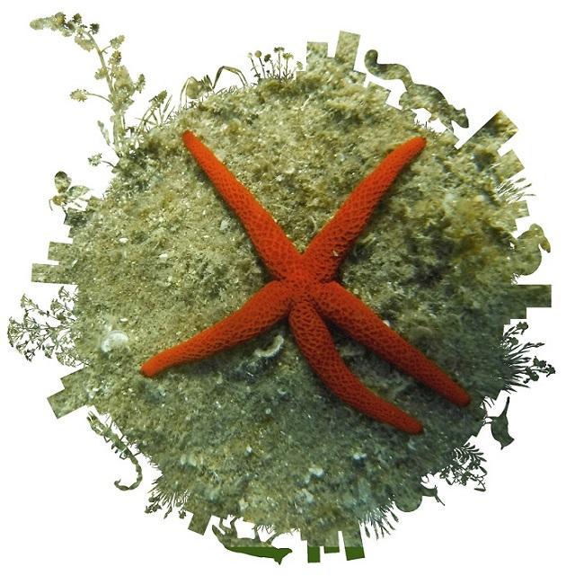 biomarato-marina