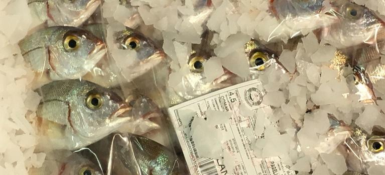 Quin-peix-mengem-talles-mínimes-i-consum-responsable