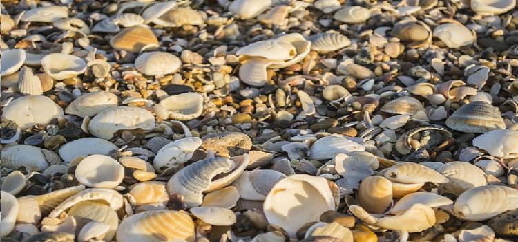 perque-no-recollir-petxines-de-les-platges