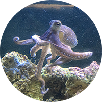 snorkel-calella
