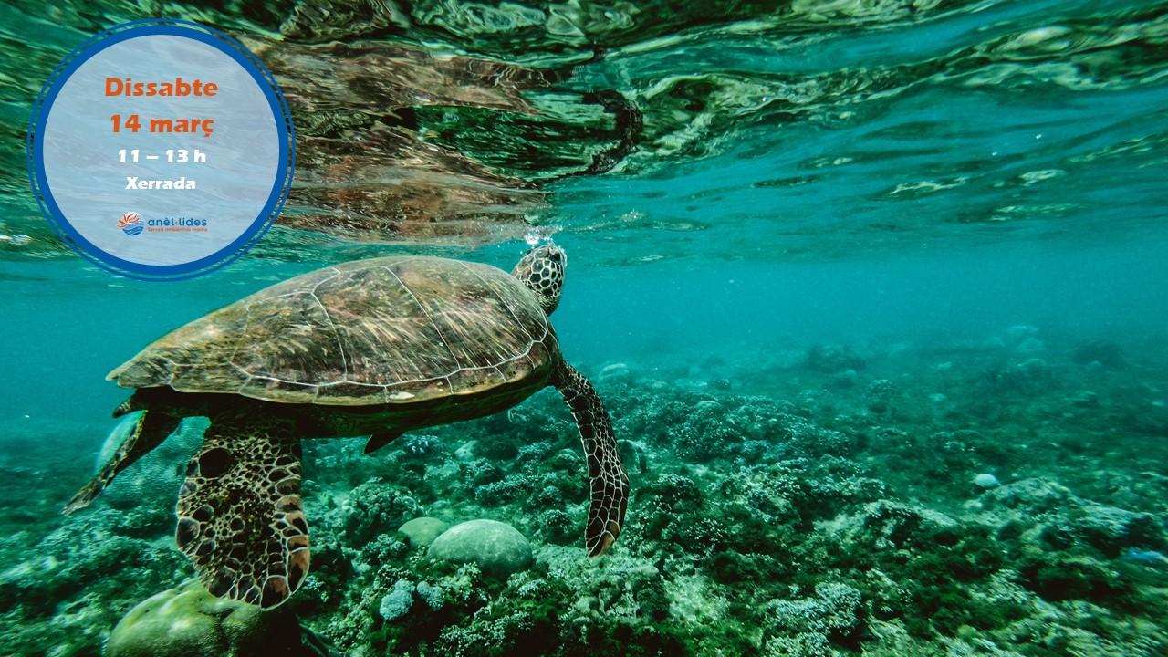xerrada-tortugues-marines-costa-rica